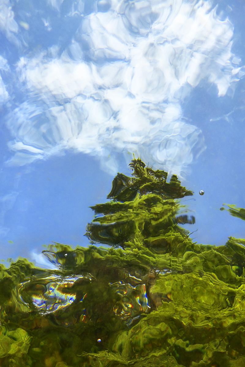 Evergreen_2015